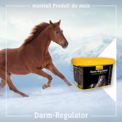 Darm-Regulator - contre l'écoulement anal